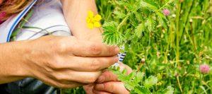 capacitacion de especies vegetales